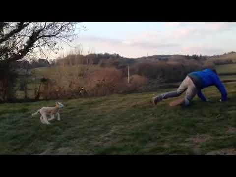 Vicious Sheep Chases Man (VIDEO)
