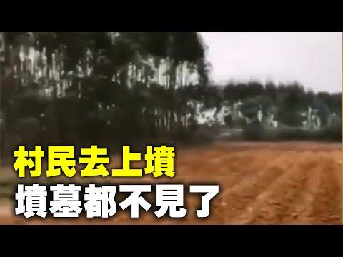 """""""三座祖坟不见了"""" 广西男祭祖傻眼:全变甘蔗园(视频/图)"""