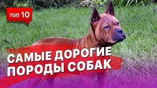 ТОП 10 самых дорогих пород собак в Мире