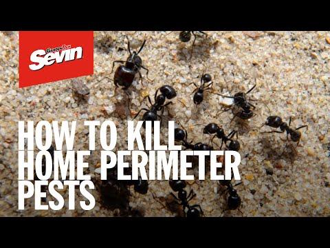 Sevin® Insect Killer Lawn Granules