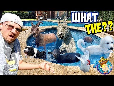 ANIMAL POOL PARTY! (FV Family Vlog)