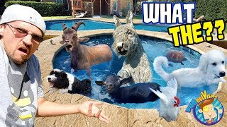 ANIMAL POOL PARTY! (FV Family Vlog)