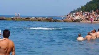 Дельфины в Вардане(Дельфины очень часто подплывают у нас к берегу), 2016-03-31T15:02:21.000Z)