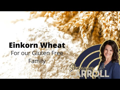 Einkorn Wheat for our Gluten Free Family