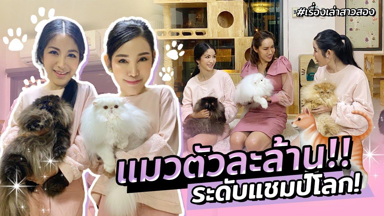 เลี้ยงแมวตัวละล้าน!! กะเทยไทยดังไกลทั่วโลก   เรื่องเล่าสาวสอง EP.38