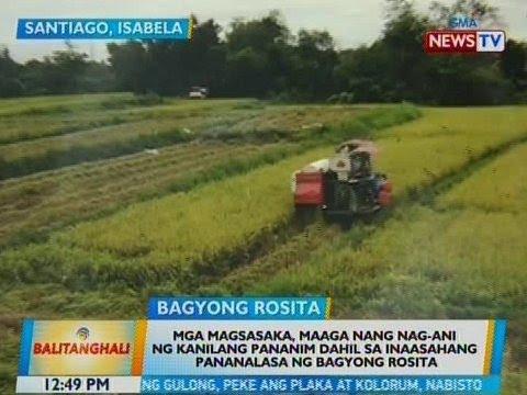 Mga magsasaka sa Isabela, maaga nang nag-ani dahil sa inaasahang pananalasa ng Bagyong Rosita