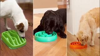 Миски для собаки, какие бывают и какие выбрать?