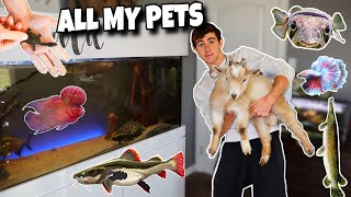 tour-of-all-my-pets-pufferfish-goats-ducks-and-more