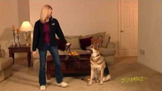 How To Train Your Dog To Stay On Command For Dummies