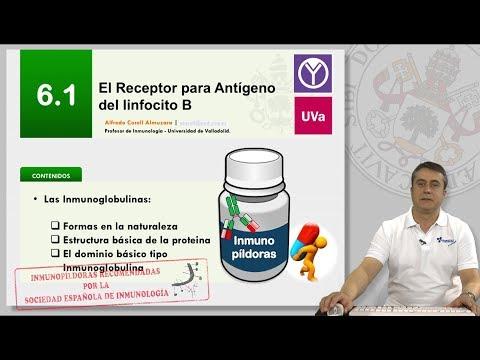 6.1 EL RECEPTOR PARA ANTÍGENO DEL LINFOCITO B