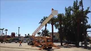 Palm Tree Trimming -  Harvard District Hemet, California