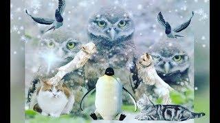 С Первым днем Зимушки🐧 -Зимы!Поздравление!Живая открытка!Скоро Новый год🎄🎁🎁🎁!