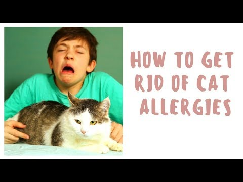 How To Get Rid Of Cat Allergies