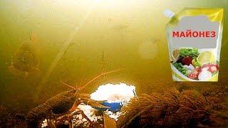 Реакция рыбы на МАЙОНЕЗ!!! Карась, линь, плотва, раки. Подводная съемка
