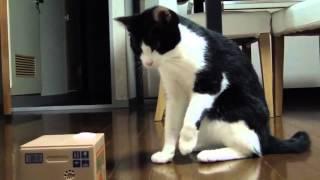 Залипалка для кота