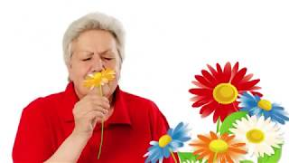 Голова садовая - Как избавиться от вьюна
