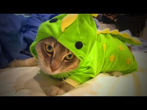 Cute Pets 🐱🐶 Lovely Cats And Dogs Wearing Costumes (Full) [Funny Pets]