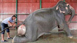 Bu 10 Hayvan Doğum Yaparken İşte Böyle Görünüyor.
