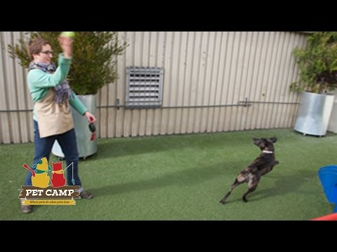 Pet Songs: How To Have Fun At Pet Camp