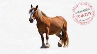 Как легко простым карандашом нарисовать лошадь из мультика(как нарисовать лошадь, как нарисовать лошадь поэтапно, как нарисовать карандашом лошадь, как нарисовать..., 2014-08-07T05:38:36.000Z)