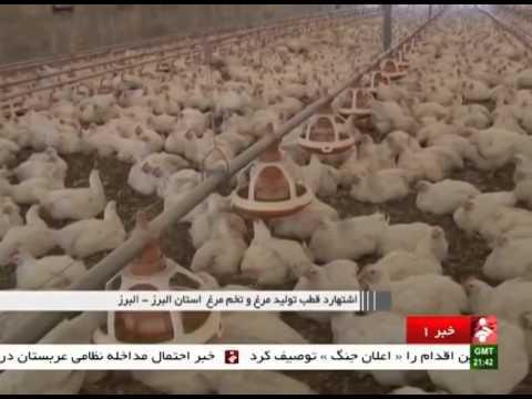Iran Eshtehard county, Chicken & Egg production report گزارش توليد مرغ و تخم مرغ اشتهارد ايران