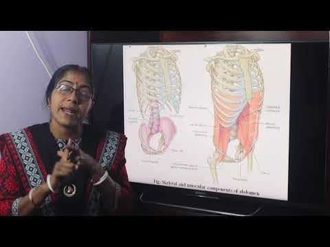 Lecture on Introduction to Abdomen