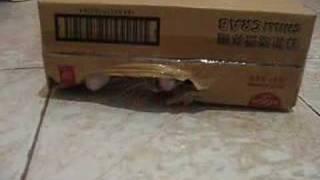 Kaka Chu the Box Cat
