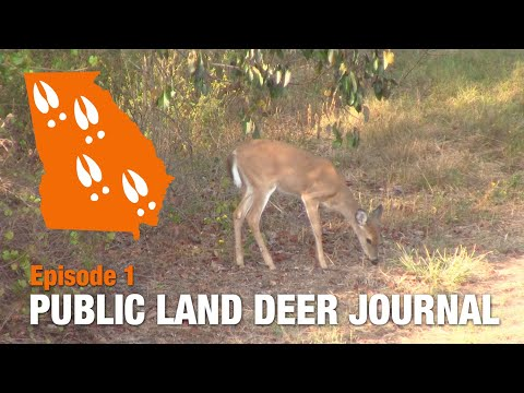 Dropping Persimmons On Georgia Public Land | 2019 Public Land Deer Journal Episode 1