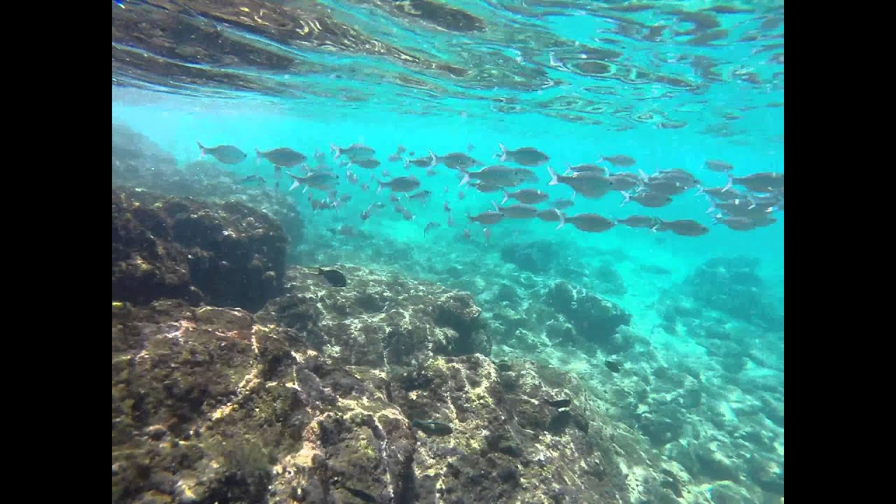 Maui Snorkeling At Kaanapali Beach Black Rock 6 21 2017 Part Iii