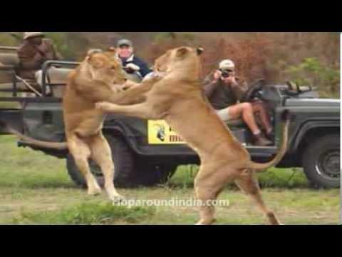 10 Amazing Wildlife Safaris in India