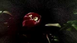 (HD 1080p) Vivaldi - The Four Seasons (Spring I. Allegro), Joshua Bell