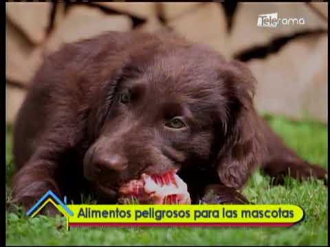 Alimentos peligrosos para las mascotas