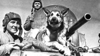 Азаревич Вероника ЖИВОТНЫЕ В Великую Отечественную Войну