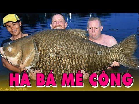 Những Thủy Quái Huyền Thoại Siêu KHỔNG LỒ Từng Được Người Việt Nam Bắt Được