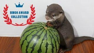 Otter bingo 2108 Top 5 videos