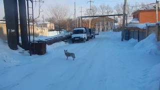 Грязно-белая собака отбежала