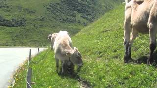 Alps - Swiss cow bells and bikes