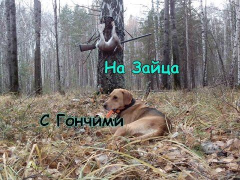 Охота на Зайца с Гончими Собаками.