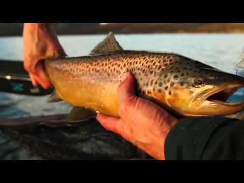 Fall Fly Fishing in Patagonia
