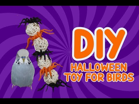 🎃-simple-halloween-spider-toy-for-parrots-🎃