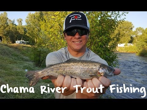 Trout Fishing New Mexico's Chama River