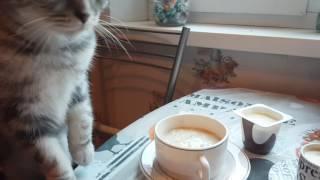 Кот и овсянка