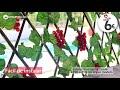Vídeo: Celosía extensible blanca Terracota WS-593 hojas enredadera 2'60 m