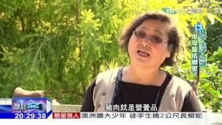 2017.02.25神秘52區/墓中生子之謎 「鬼母墓」佑鄉里?