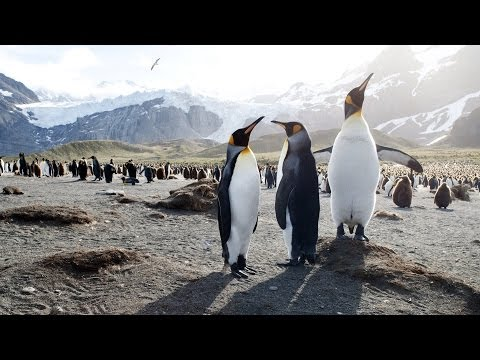Our Penguins, Our Oceans | Pew
