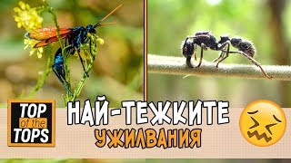 Най-болезнени ужилвания от насекоми