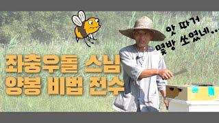주인도 몰라보는 벌들 …