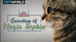 My Turkey: Meet the cat that guards the Hagia Sophia