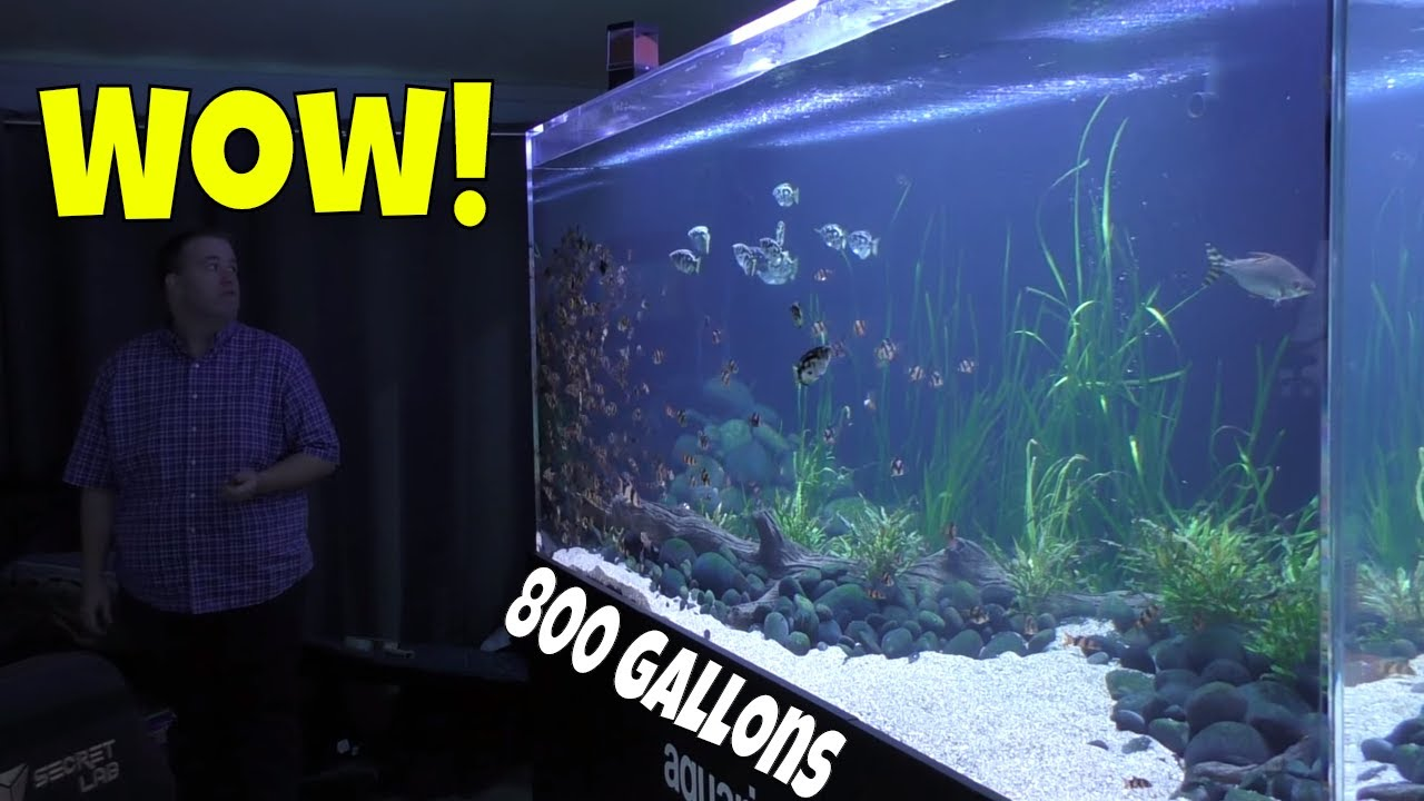 This 800 Gallon Aquarium Will Change The Way You Look At Monster Fish Tanks Youtube
