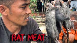 Loài Chuột Cống Xù Thơm Ngon Từng Miếng Thịt